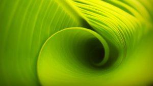 Hogyan kezdj bele a zöld online kommunikációba? Válassz a céljaidnak megfelelő csatornákat!