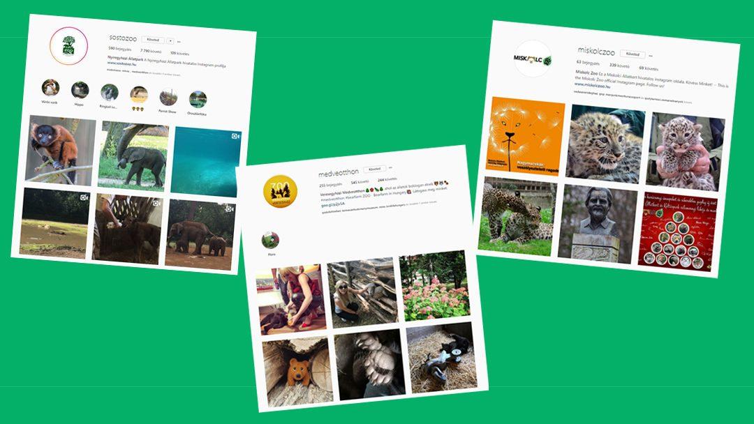 Vajon ott vannak a hazai állatkertek az Instagramon?